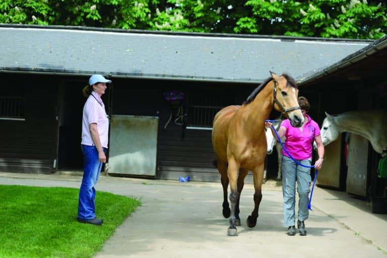 Horse being led for vet