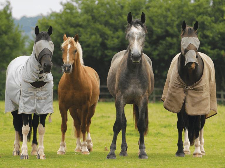 Barefoot horses