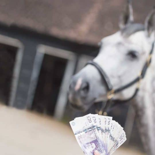 Cost of keeping horse at livery