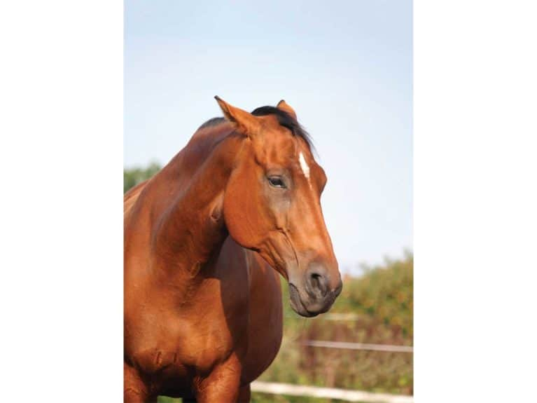 Horse showing signs of stress