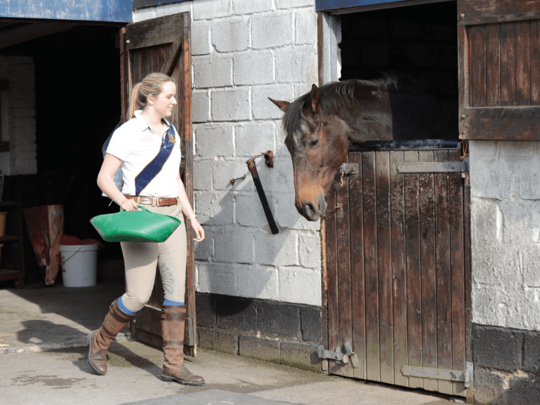 Horse being fed