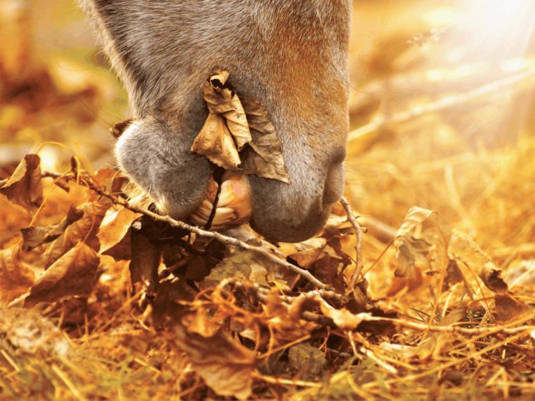 Horse Grazing Fallen Leaves