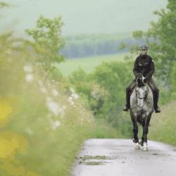 Horse hacking