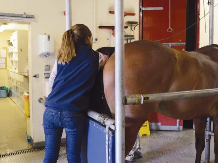 Horse Rectal Examination
