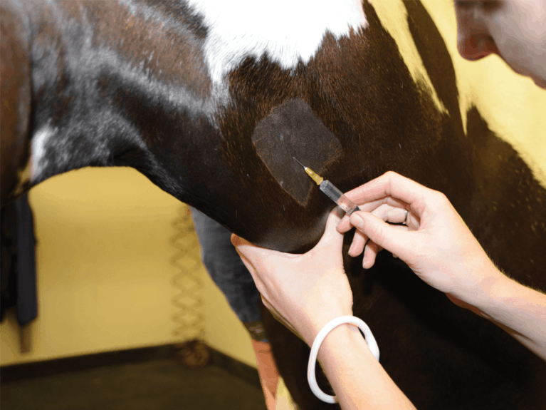 Vet injecting a horse