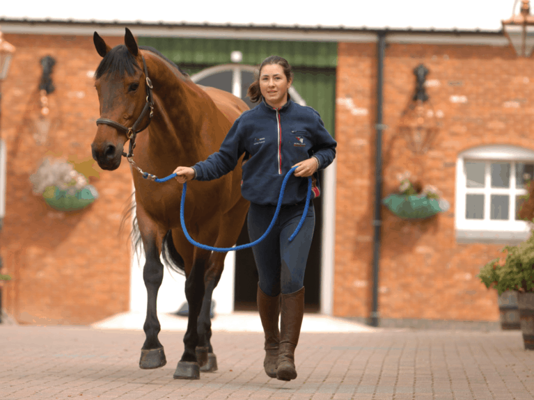 Horse being trotted up to spot signs of arthritis