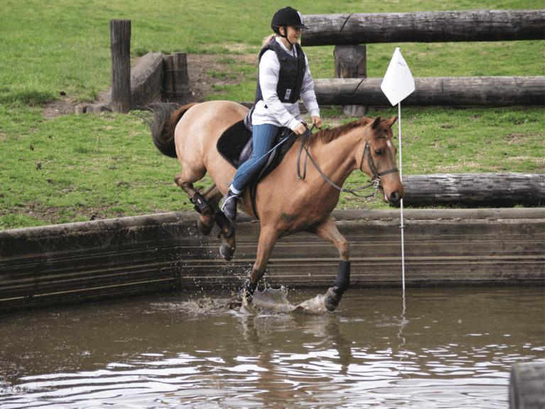 schooling in water