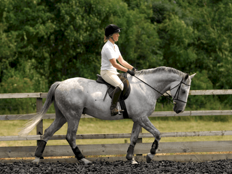 Horse nodding whilst it walks