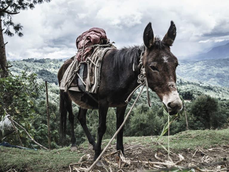 Brooke, equestrian charity