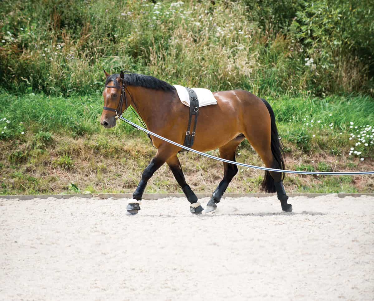Lungeing Kit Explained Horse And Rider