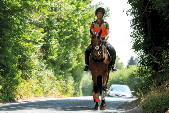 horse and rider hacking