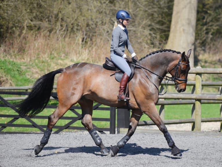 Warm up your horse properly before a working hunter class