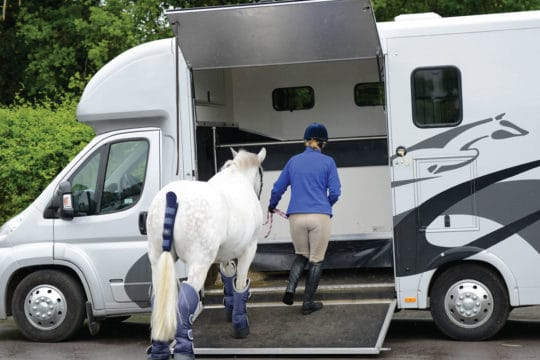 Horse being loaded into a 3.5t horse box