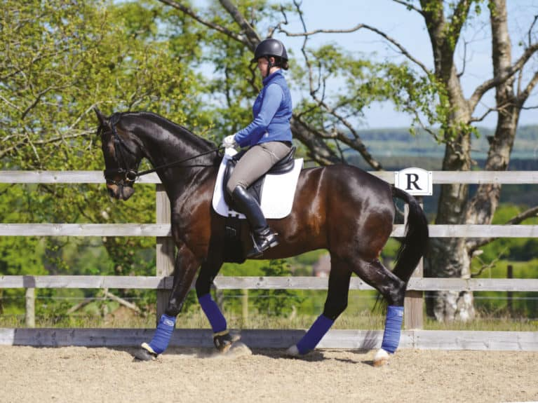 Horse completing a rein-back movement