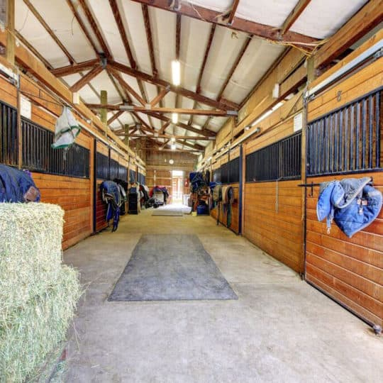 Horse Indoor Stables