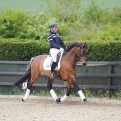 An uphill horse being ridden