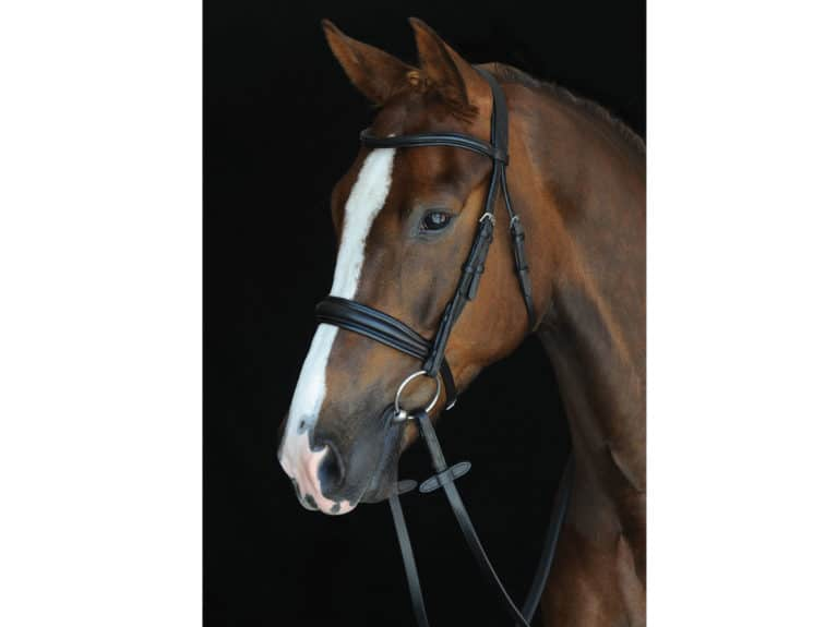 Collegiate Mono Crown Padded Raised Cavesson bridle