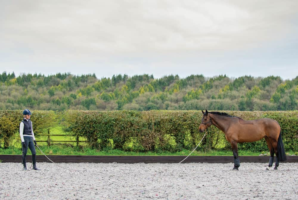 groundwork exercises with your horse