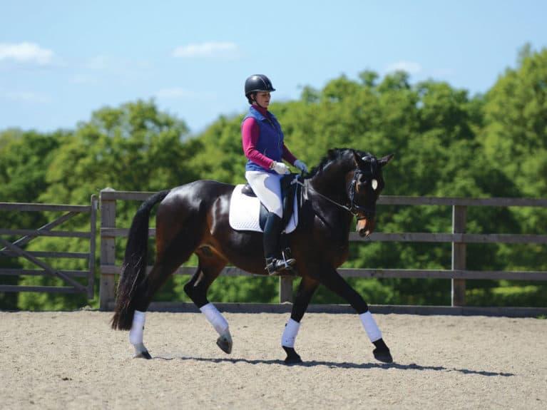 Schooling a horse