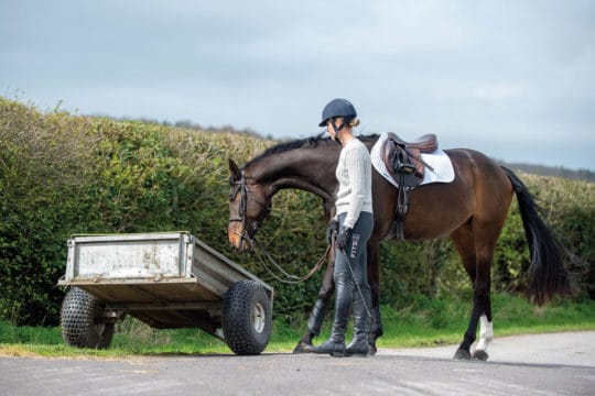 Groundwork with your horse to allow him to get used to objects