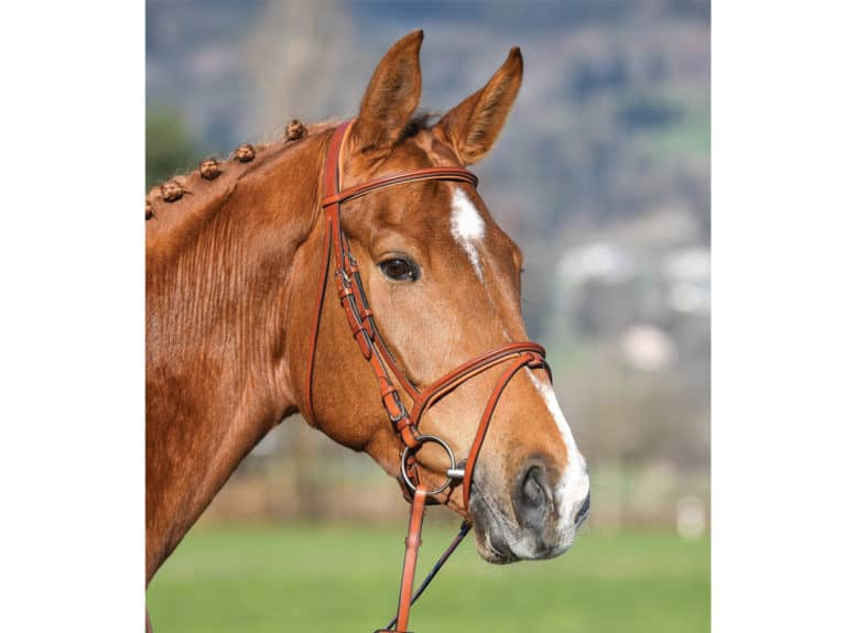 Vespucci Flash Bridle from Zebra Products