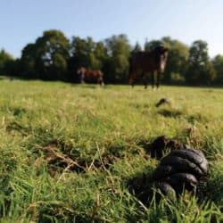 Identifying worms in horses and how to manage them