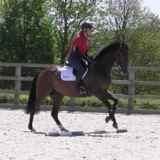 Horse&Rider –Spring 2019