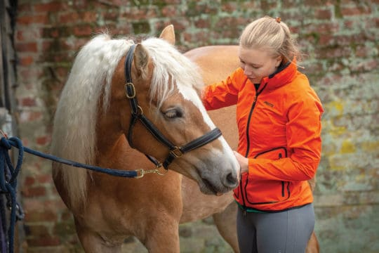 Finding the right horse