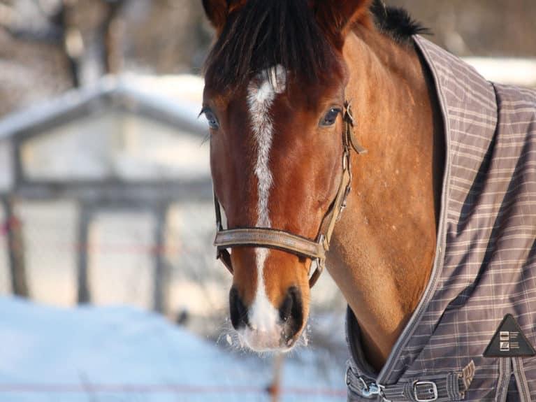 Feeding a senior horse in winter
