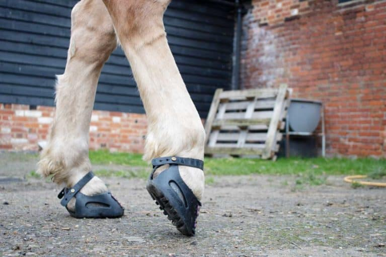 Horse wearing hoof boots