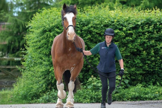 Spotting lameness in the horse