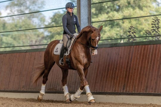 Carl Hester's tips on buying a dressage here