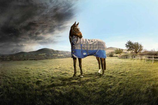 Weatherbeeta rug