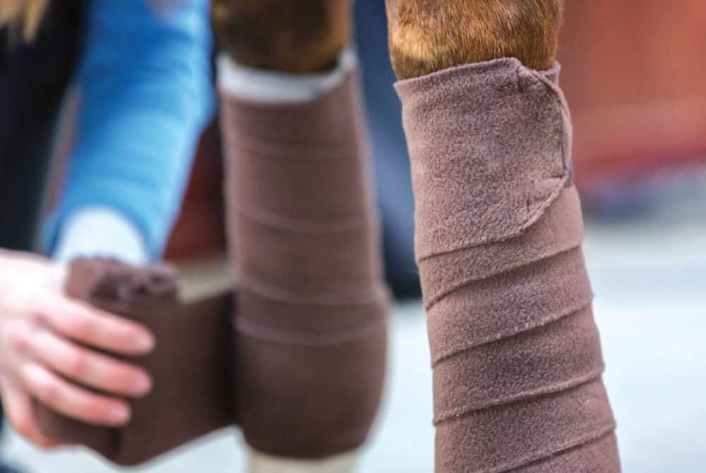 Bandaging horse's legs