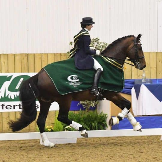 Nikki Crisp in the NAF 5 Star dressage championships