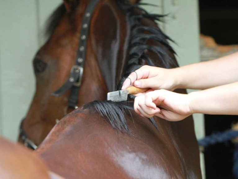 Getting horse ready for a show