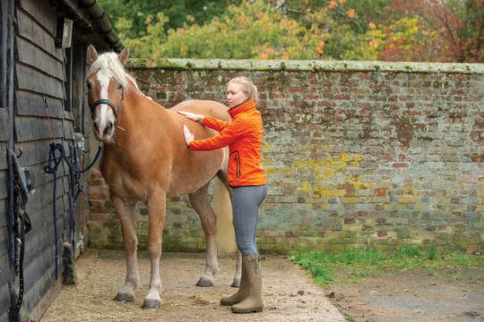 Helping your horse lose weight