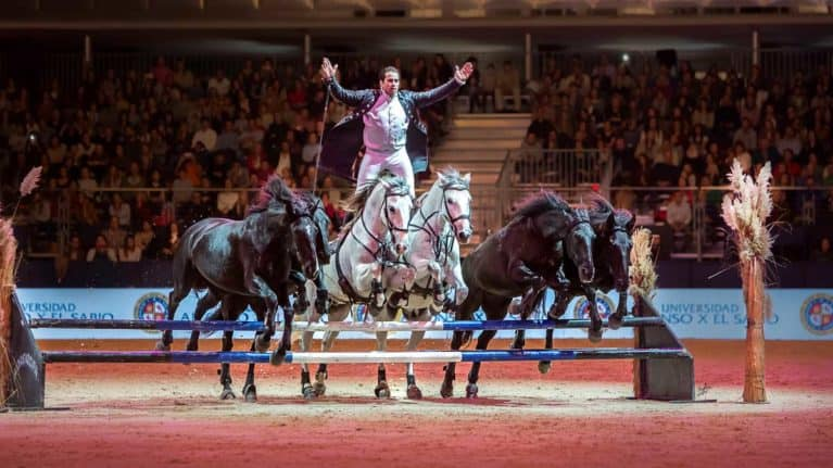 Win tickets to HOYS 2019