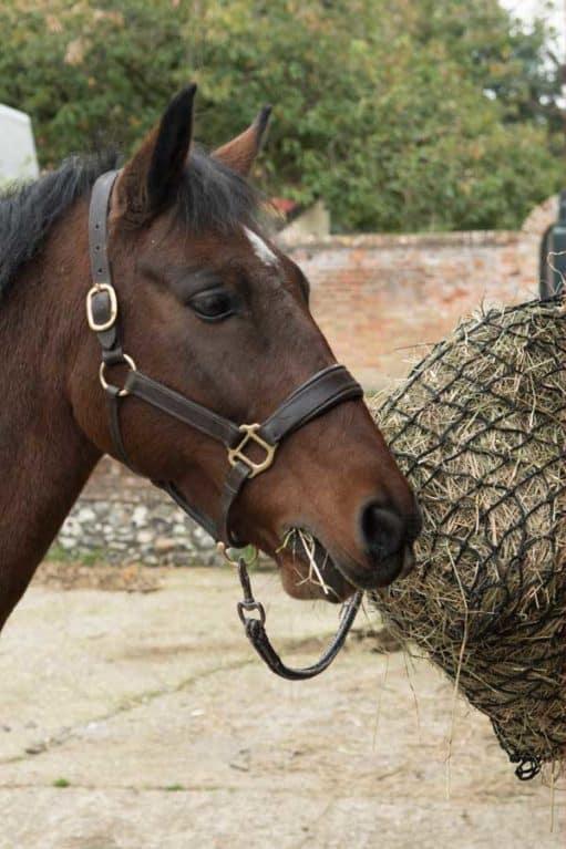 Horse eating forage