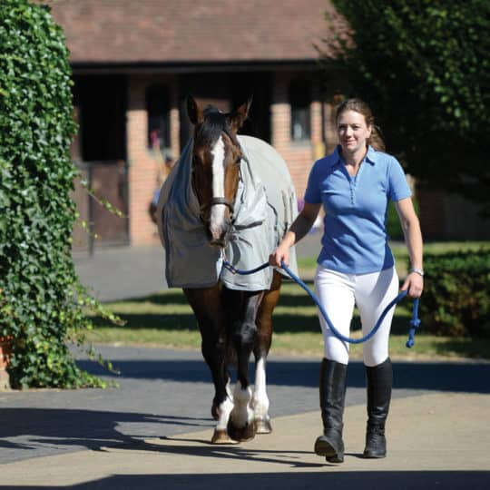 Taking care of your horse during summer