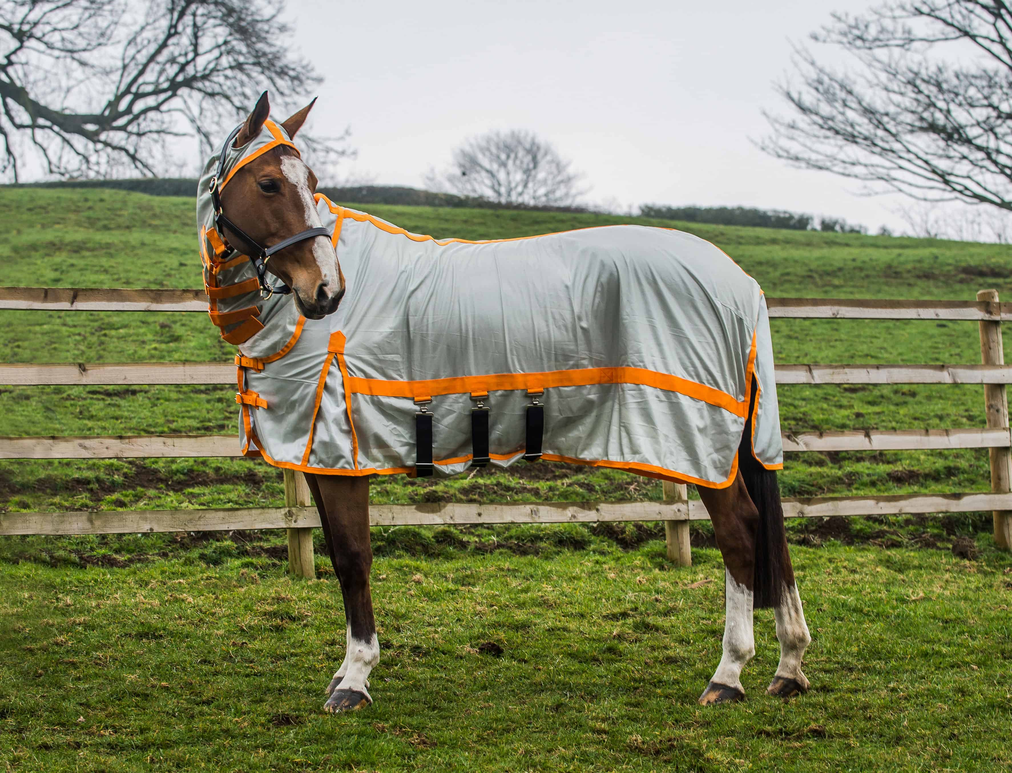 Win A Derby House Pro Fly Rug Horse