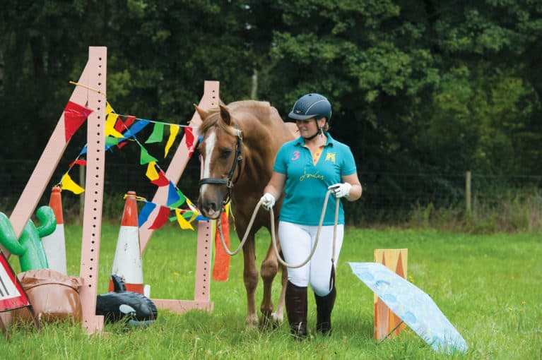 In-hand agility with a non-ridden horse