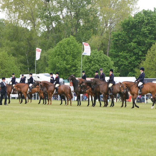 Horse showing line-up