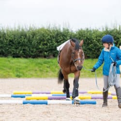 In-hand polework exercises