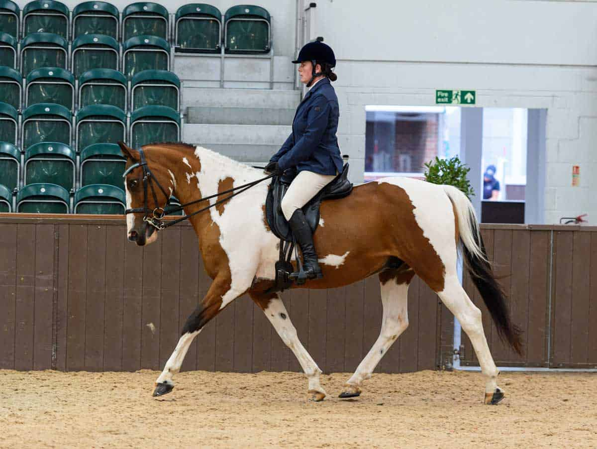 Anne Hollier and The Scout, runner up in 2019 SEIB Search for a Star Riding for the Disabled Championship final