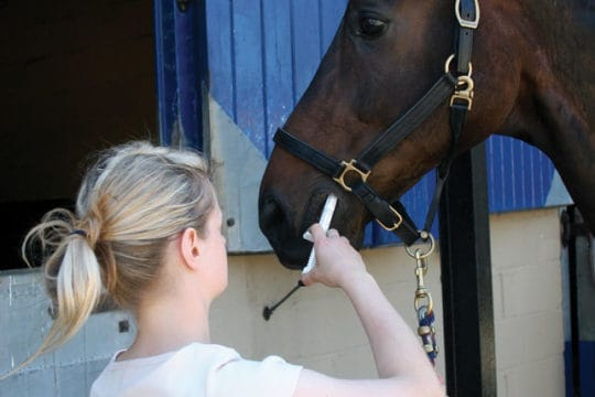Horse being wormed