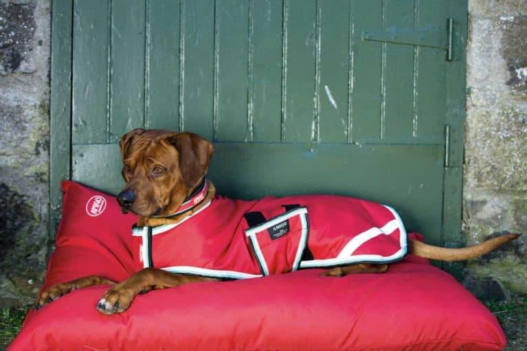 Amigo dog bed