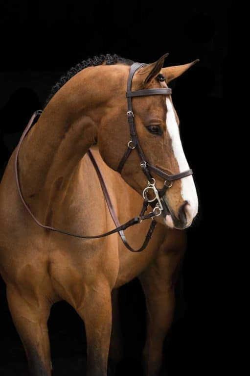 Rambo Micklem Original Competition bridle