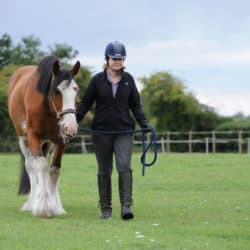 Ground handling with your horse
