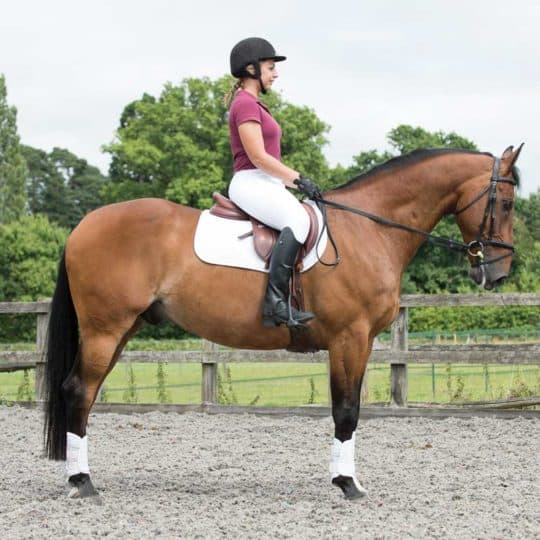 Pilates for horse riders, creating a better seat